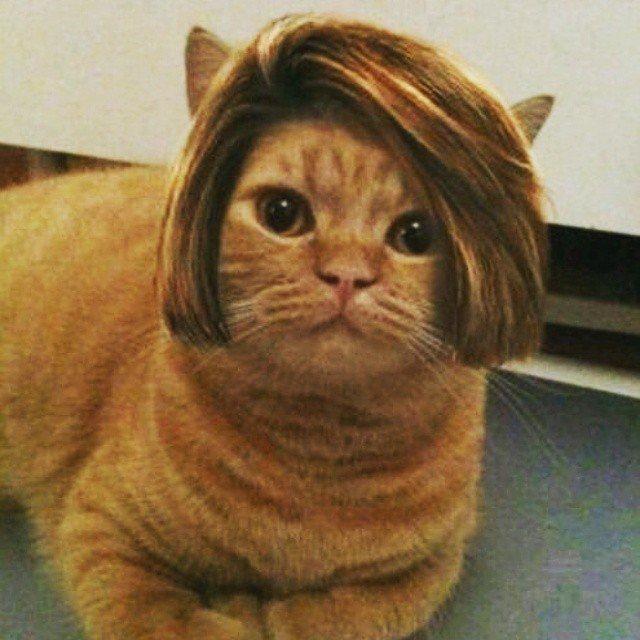 bob-haircut-124